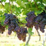 Vinrejser til Madeira