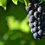 Gode vine samt badeferie på Tenerife