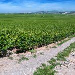 Navarra - Meget mere end Rosévin