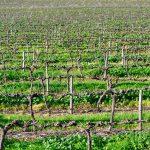Vinregioner